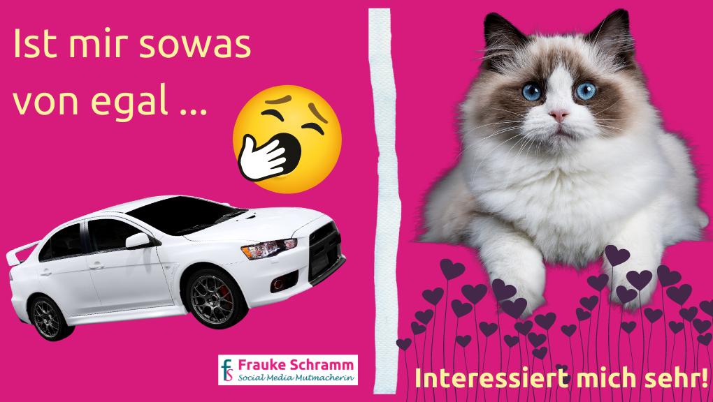 Frauke Schramm Social Media Mutmacherin Newsfeed Auto Katze